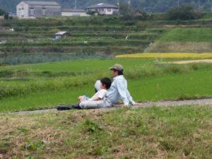 川之内の田圃風景