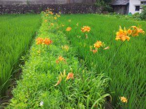 穂田琉の農作業風景 花