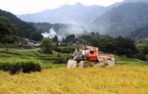 穂田琉の農作業風景